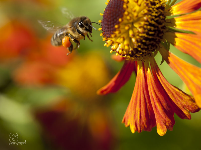 flower with pollinating bee