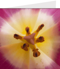 macro photograph showing the pistil and stamens