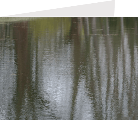 water,trees,nature,abstract,nature
