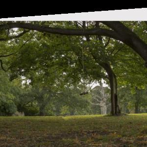 ttree swing in an autumnal garden